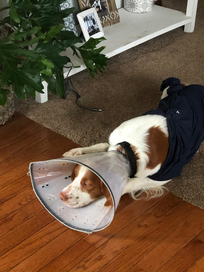 2020: A Year In Review -Finn with the cone